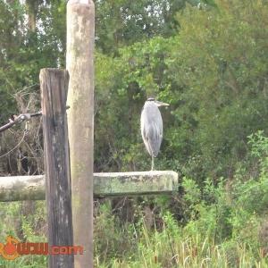 Bird in RC