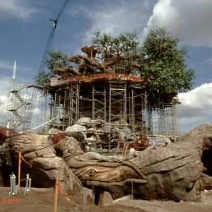 Animal-Kingdom-Construction-3-Legal-Clearance