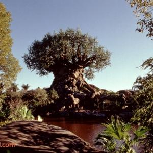 Animal-Kingdom-Safari-Village-Tree-of-Life-Legal-Clearance