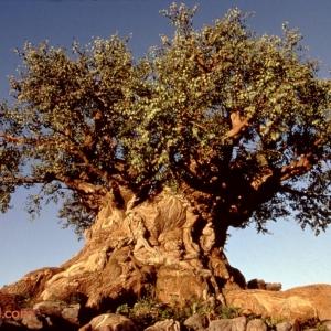 Animal-Kingdom-Tree-of-Life-Legal-Clearance