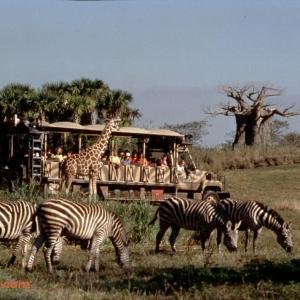 Kiliminjaro-Safari