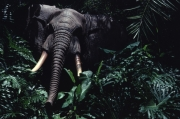 Jungle Cruise August 82