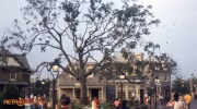 Libery Tree 1970s