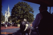 Main Street USA Horse Drawn Trolley Cinderella Castle
