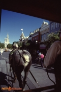Onboard the Horse Drawn Carriage on Main Street USA