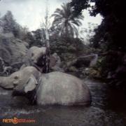 Juncle Cruise Elephants April_72