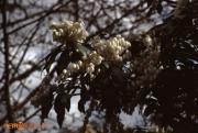 Flower April_83