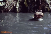 Hippo Aug 78