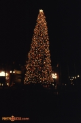 Christmas Tree at Disney-MGM Studios at Night