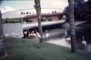 EPCOT Odyssey Flamingos