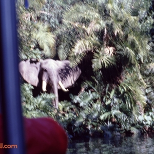 Jungle Cruise 10 1979