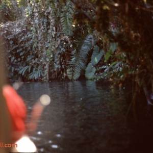 Jungle Cruise 11 1979