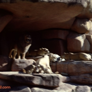 Jungle Cruise 5 1979