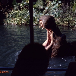 Jungle Cruise 7 1979