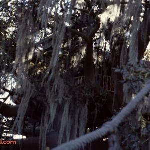 Treehouse 1979
