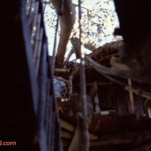 Treehouse 3 1979