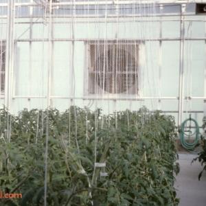 Behind The Seeds Feb 92 10