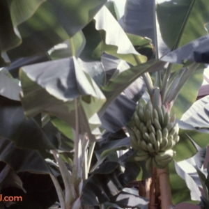 Behind The Seeds Feb 92 14