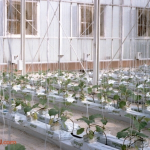 Behind The Seeds Feb 92 15