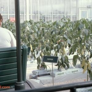Behind The Seeds Feb 92 3