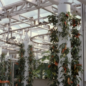 Behind The Seeds Feb 92 7