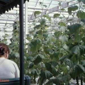 Behind The Seeds Feb 92 8