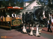Main street horse drawn trolley 1982