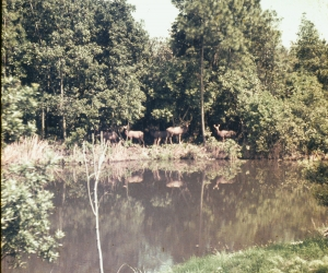 Wildlife from '73