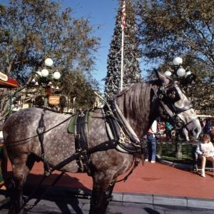 Magic Kingdom Dec 28 1989_150