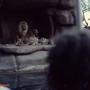 JC Lions November 73