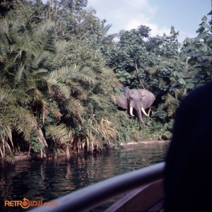 Jungle Cruise Nov 73