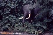 Elephant November 73
