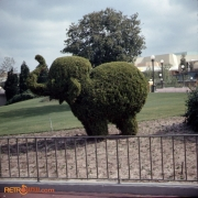 Elephant Topiary Nov 73