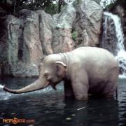 Elephant Nov 77