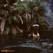 Jungle 3 Nov 77