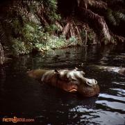 Jungle 4 Nov 77