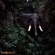 Jungle 7 Nov 77