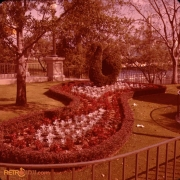 Swan Plaza Nov 77