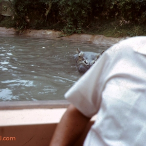 Mover over Earl, there's a Hippo behind ya!