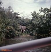 1970 Magic Kingdom  Adventureland Jungle Cruise
