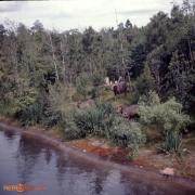 1970s16