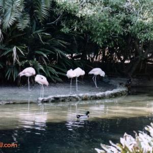 Discovery_Island_0036_a
