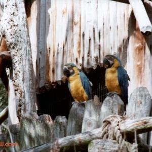 Discovery Island birds