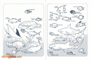 1986 Coral Reef Fish ID Chart 1