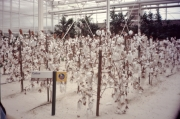 Living-With-tHe-LAnd-Cotton-Greenhouse