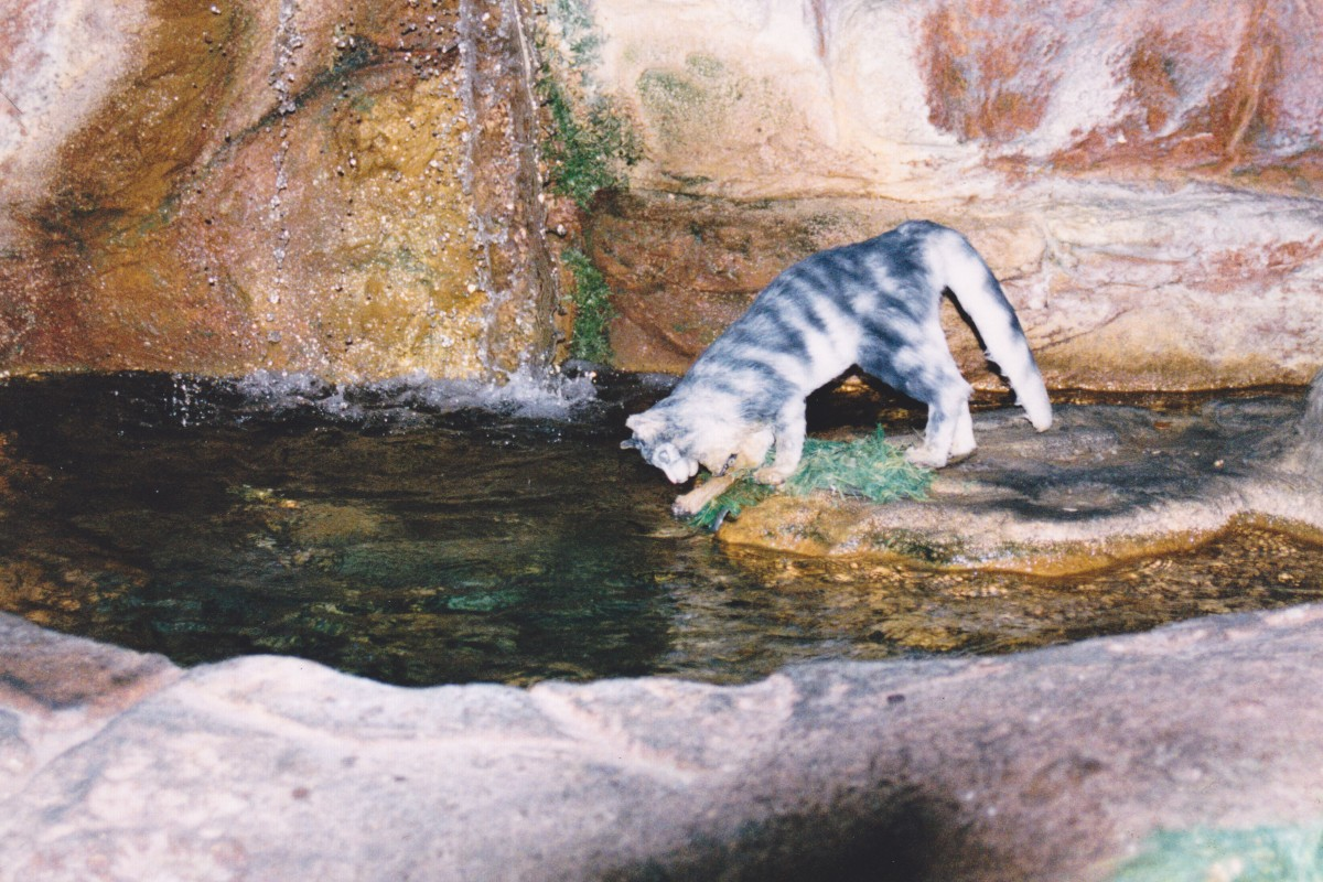 Kitty Trying To Catch a Fish