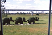 Elephant Topiaries by the TTC