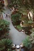 Hyatt-Grand-Cypress-Lobby