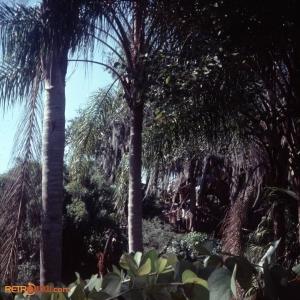 February 1978 Polynesian & MK Titus27