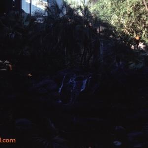 February 1978 Polynesian & MK Titus34